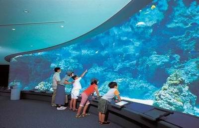 壁纸 海底 海底世界 海洋馆 水族馆 400_257