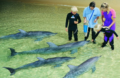澳大利亚海豚岛是与海洋动物亲密接触的天堂