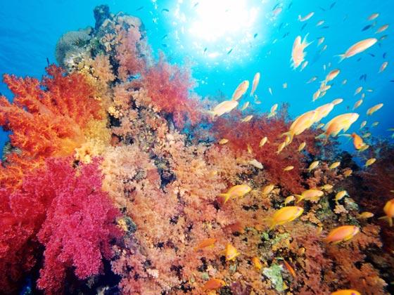 埃及-红海-自费活动