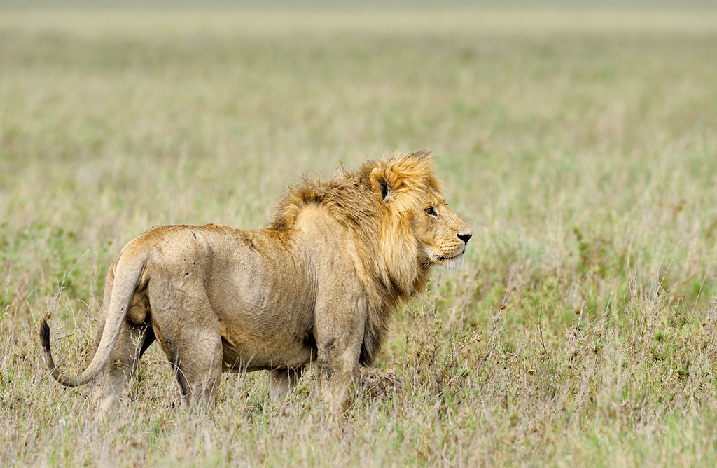 构成了世界最大的动物自然生态系统